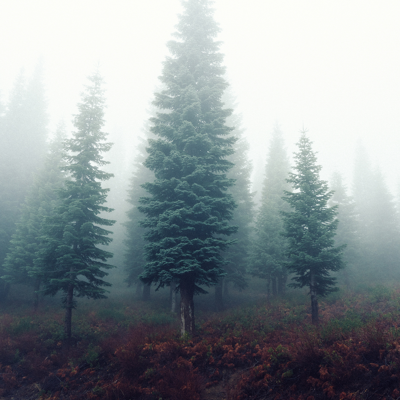 forest-trees-fog-foggy-1